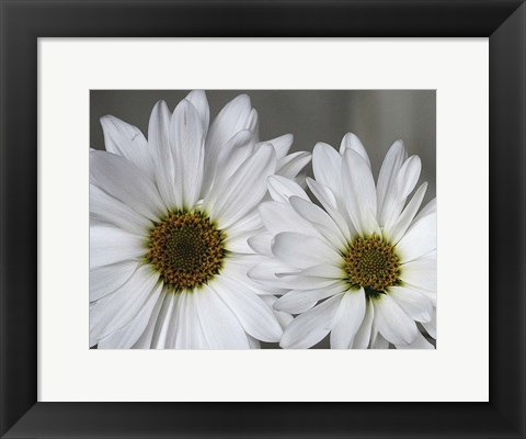 Framed Don't Eat Daisies I Print