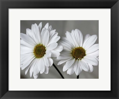Framed Don't Eat Daisies II Print