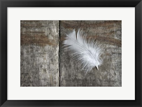 Framed Feather on Wood II Print