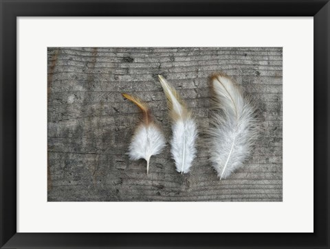Framed Three Feathers on Wood Print