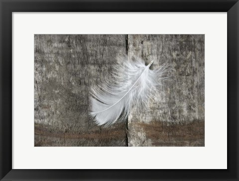 Framed Whilte Feather on Rough Wood Print