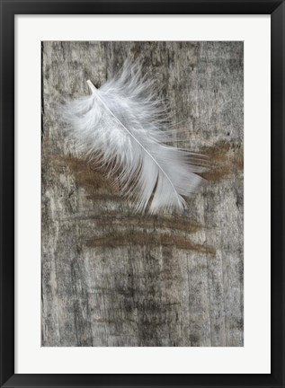 Framed White Feather on Wood Print