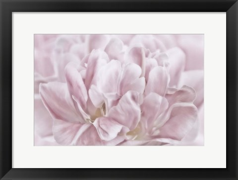 Framed Double Pink Tulip Print