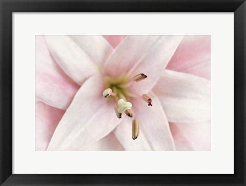 Framed Pink Lily Print