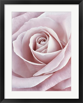 Framed Pink Rose Print