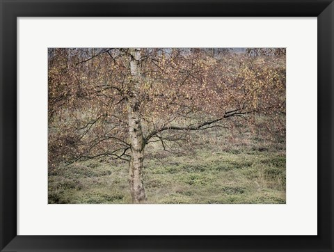 Framed Birch Print