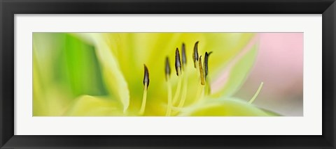 Framed Day Lily Scape Print
