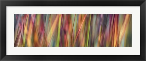 Framed Grass Spectrography Print