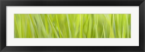 Framed Green Grass Scape Print