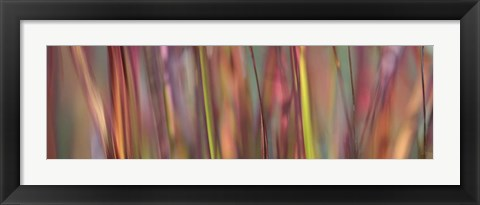 Framed Imperata Grass Scape Print