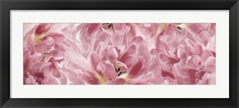 Framed Pink Tulips Scape Print
