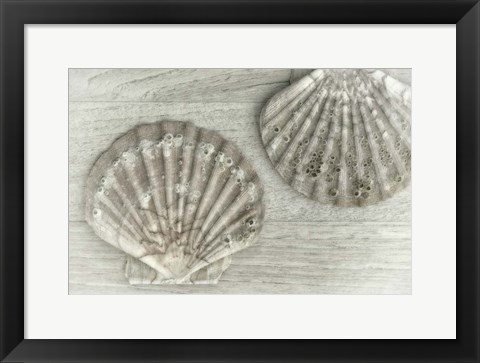 Framed Two King Scallop Shells Print
