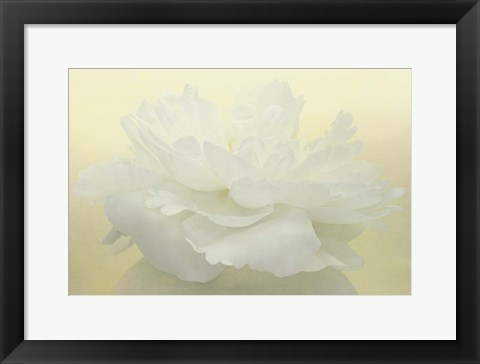 Framed Pure White Peony Print