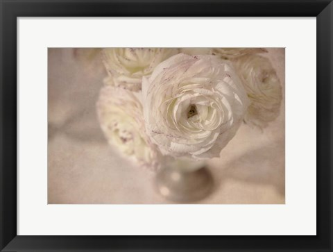 Framed White Persian Buttercup Still Life Print