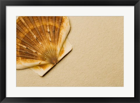 Framed Close-Up Shell Print