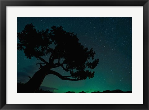 Framed Tree Shadow on Green Print