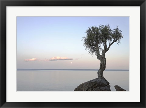 Framed Isolated Tree Print