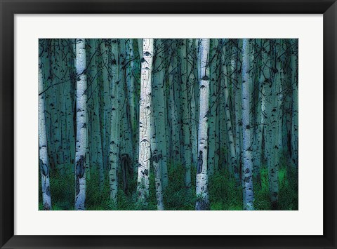 Framed White Birches Print