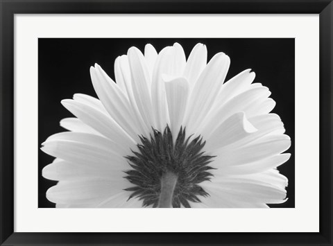 Framed White Bloom Print