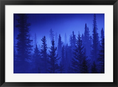 Framed Blue Sky Forest Print