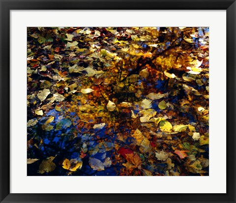 Framed Fall on the Water Print