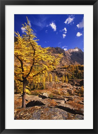 Framed Golden Tree in Mountains Print