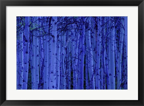 Framed Blue Birches Print