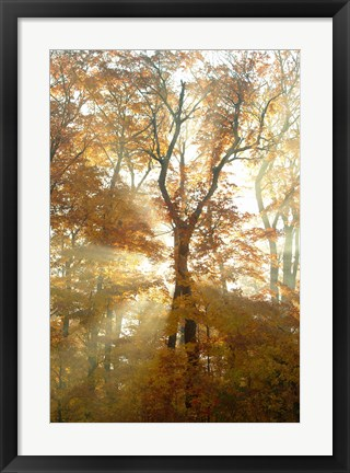 Framed Sun Through the Trees Print