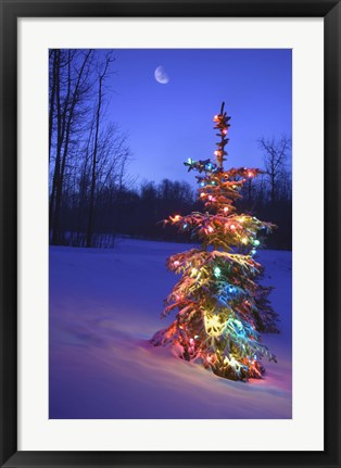 Framed Bright Tree in Snow Print