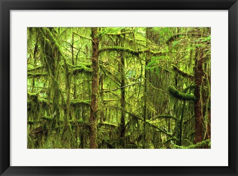 Framed Mossy Trees Print