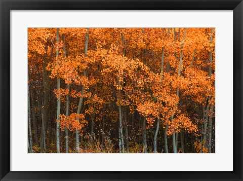 Framed Orange Trees Print