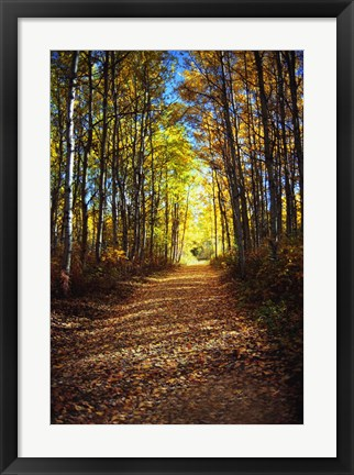 Framed Path in the Woods Print