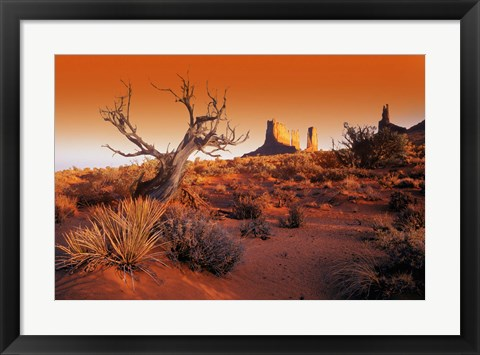 Framed Tree in the Desert Print