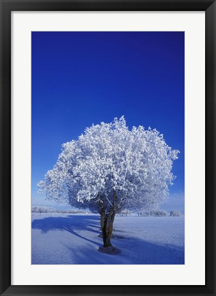 Framed Tree in Winter Print