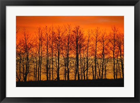 Framed Red Sunset Through the Trees Print