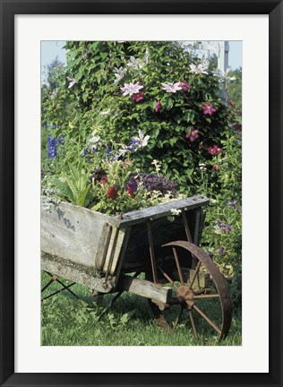 Framed Barrow of Flowers Print