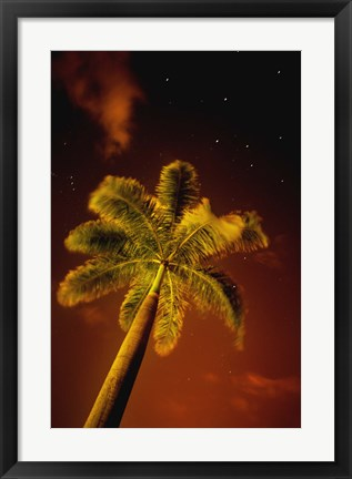 Framed Palm at Night Print