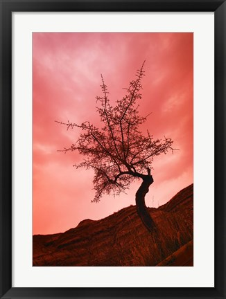 Framed Tree with Pink Sky Print