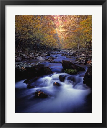 Framed Forest Stream in Fall Print