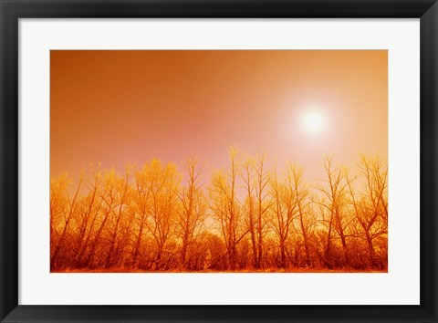 Framed Warm Trees Print
