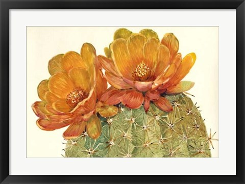 Framed Cactus Blossoms II Print