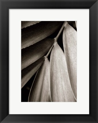 Framed Tropical Plant II Print