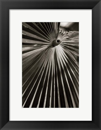 Framed Palm Frond I Print
