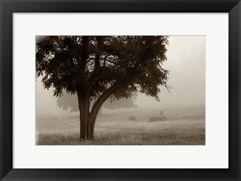 Framed Calm Mist no Limb Print