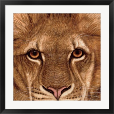 Framed Eyes of the Lion Print