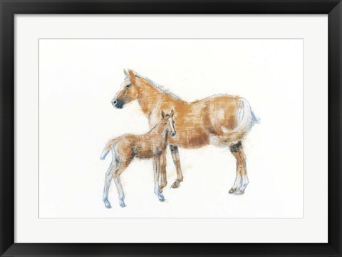 Framed Horse and Colt Print