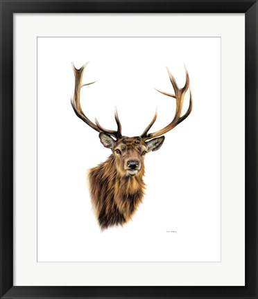 Framed Stag White Background Print
