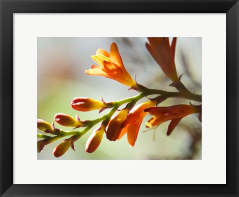 Framed Open Sunshine II Print