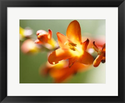 Framed Open Sunshine IV Print