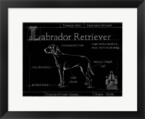 Framed Blueprint Labrador Retriever Print